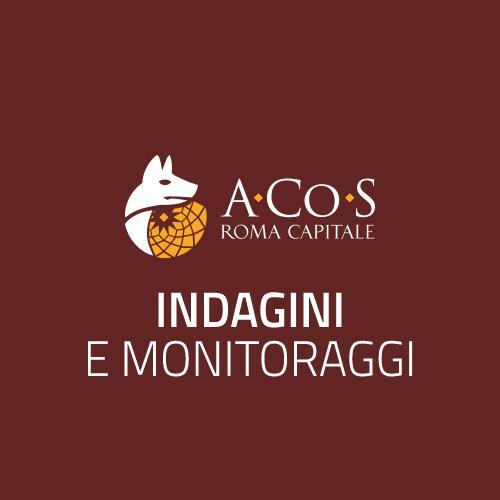 Pubblicazione del Focus sull'Illuminazione Pubblica a Roma